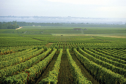 Wine has been produced in Bordeaux since Roman times
