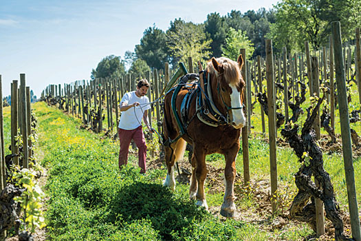 Biodynamic viticulture uses the principles of organic farming but goes further